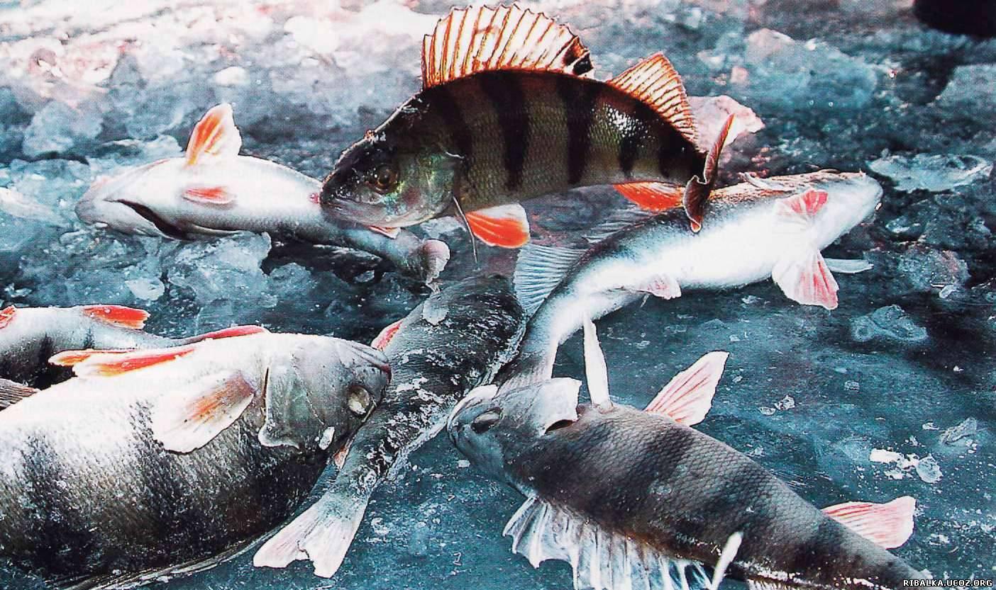 Ловля рыбы возле самого льда
